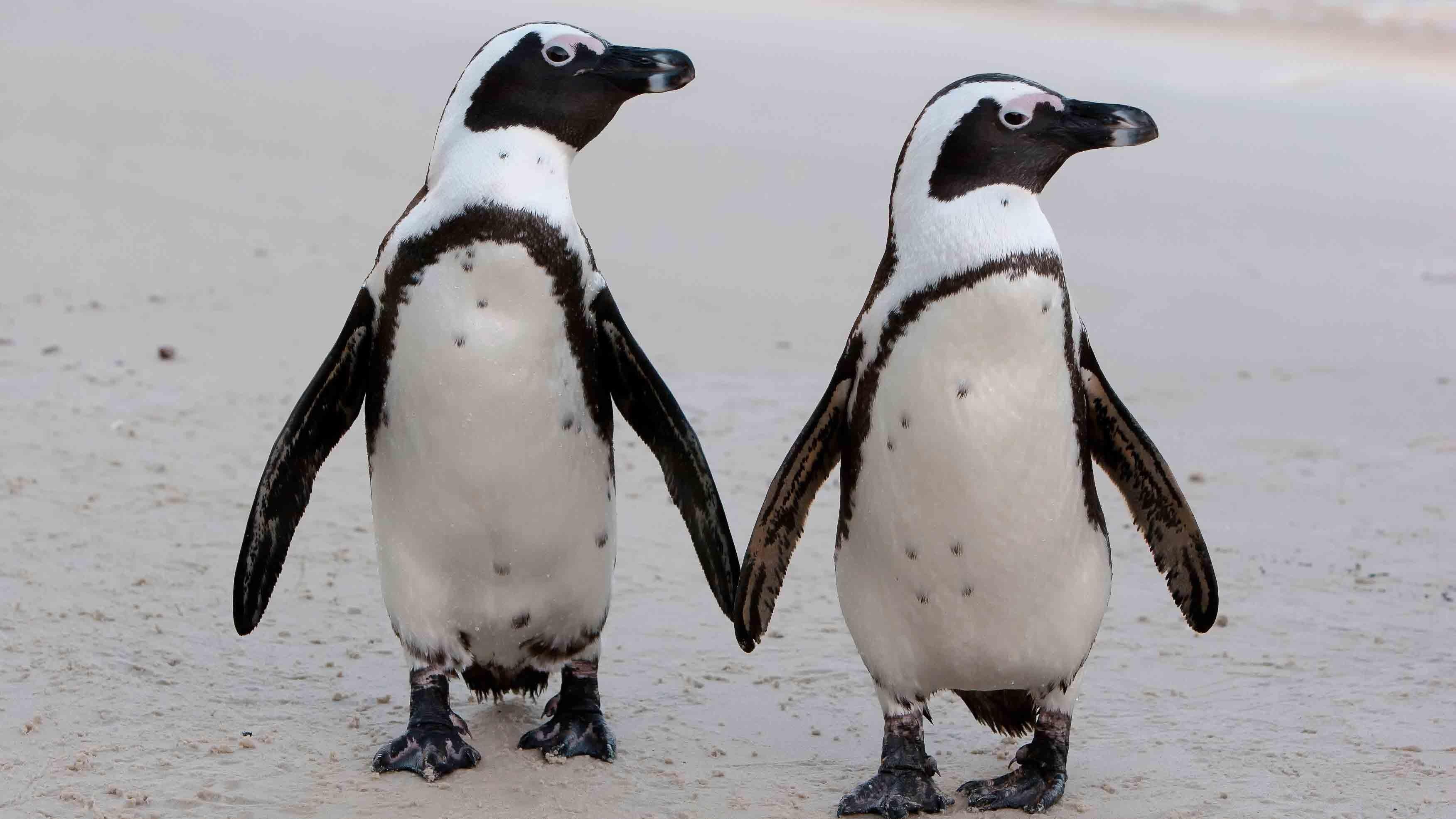 Pinguin Fakten