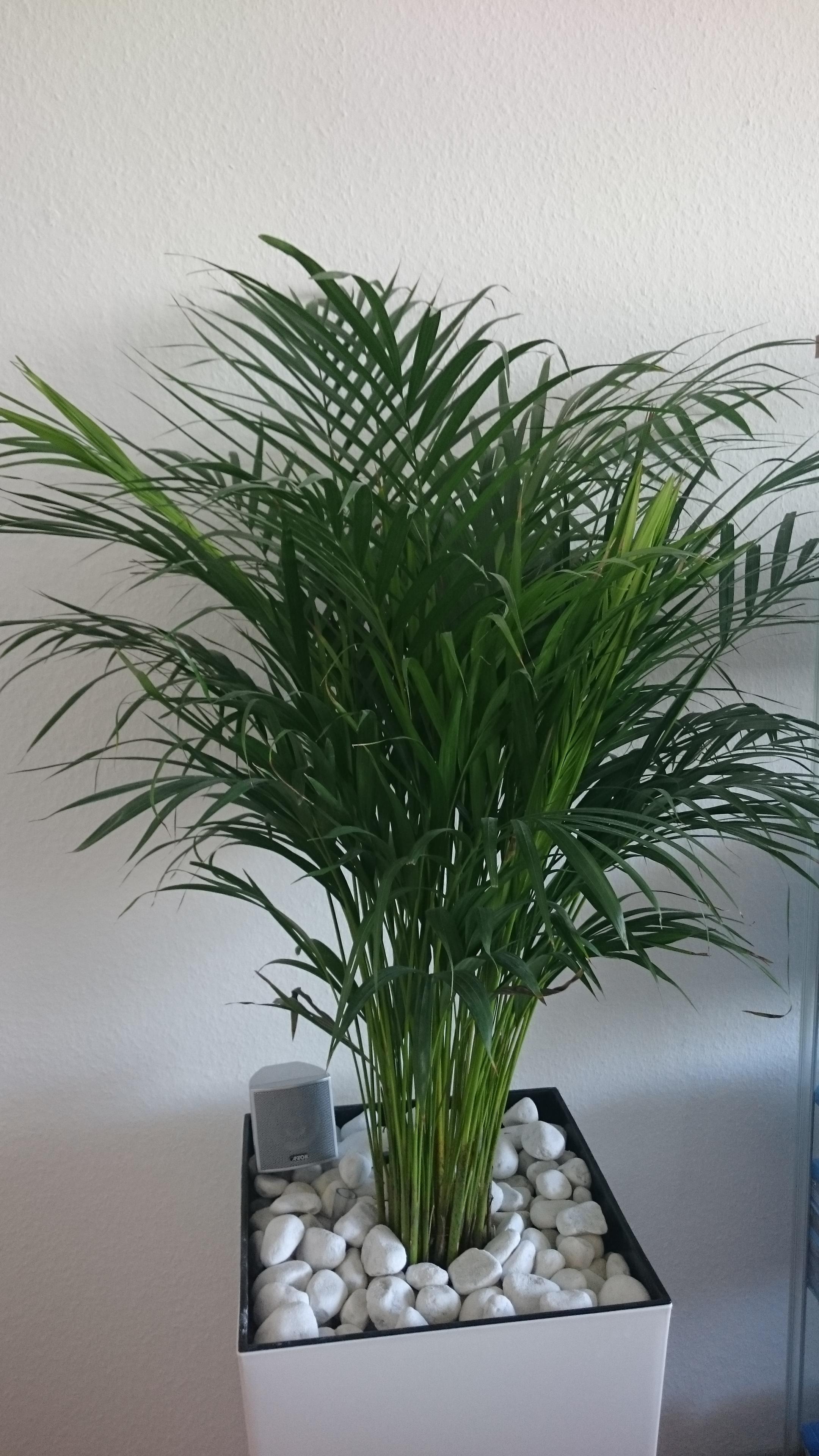 Was ist das an meiner ikea pflanze wer weiss for Ikea kunstliche pflanzen