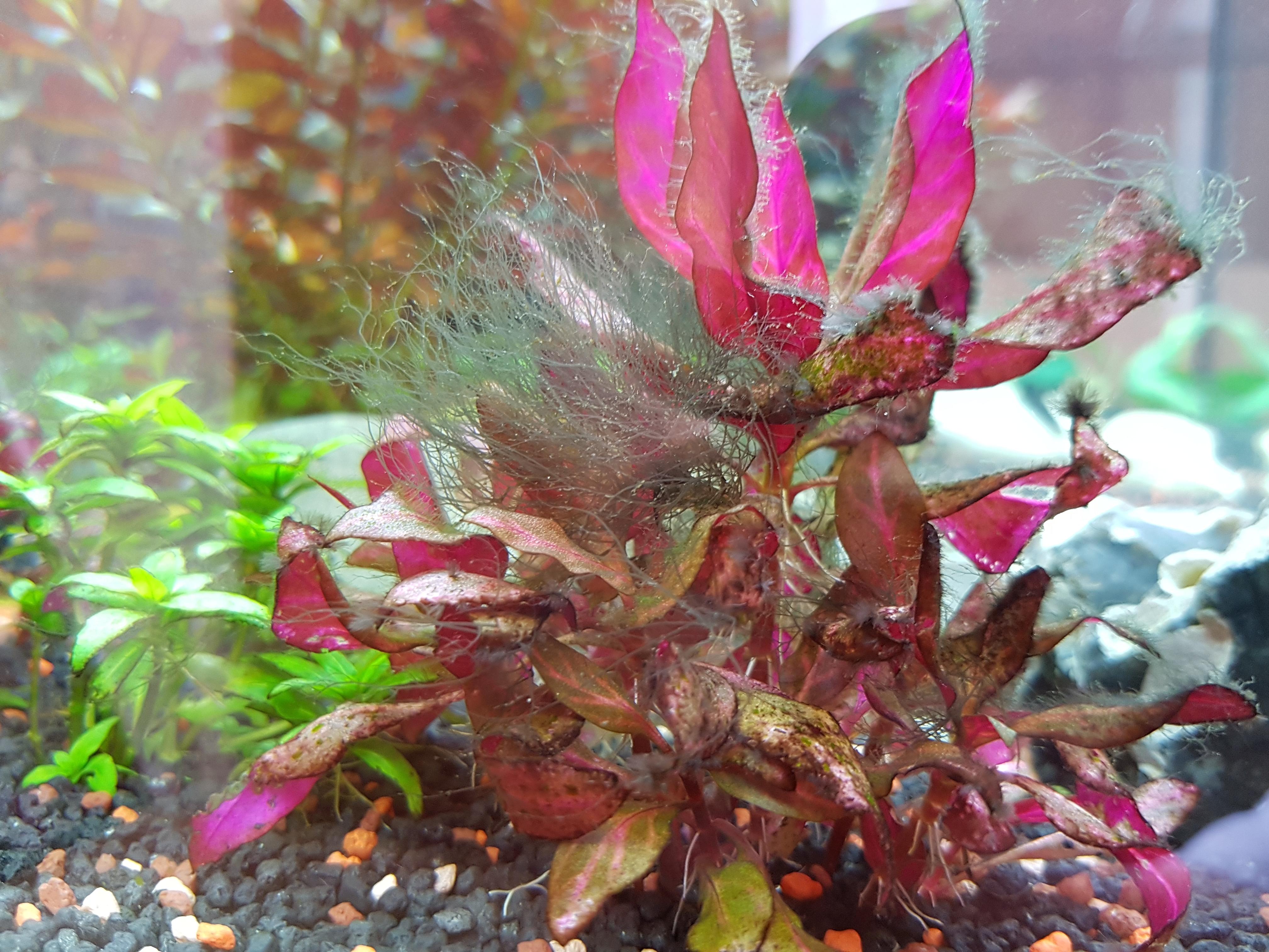 Aquarium pflanzen wer weiss for Aquarium pflanzen