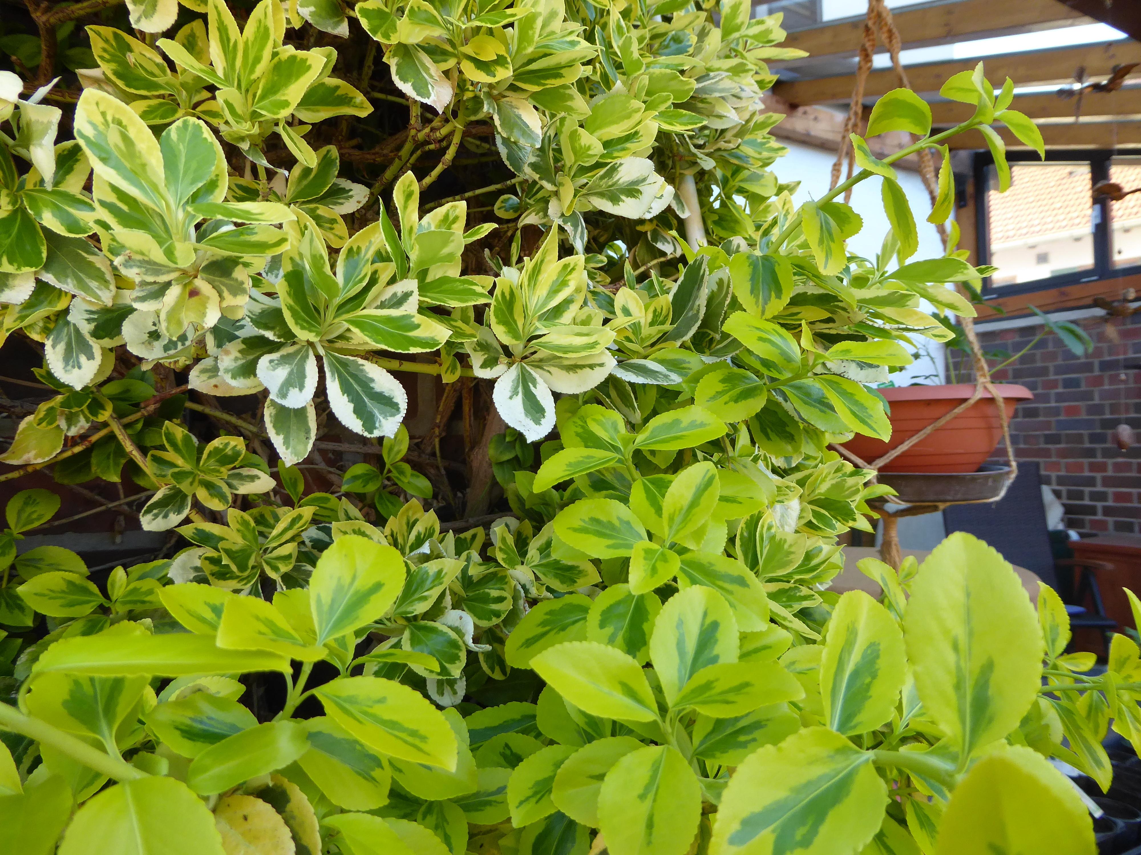 Schöne Kletterpflanzen wer kennt diese schöne kletterpflanze wer weiss was de