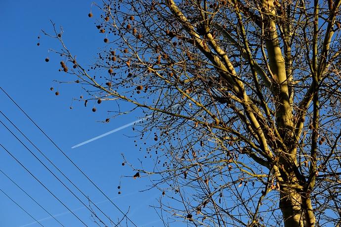 Flugzeug und Geäst